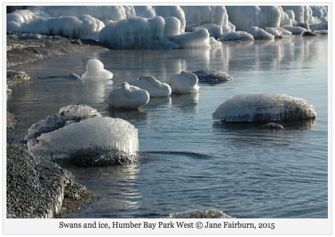 Swans ice2